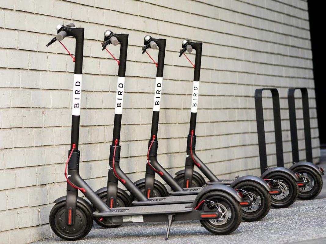 bird-scooters